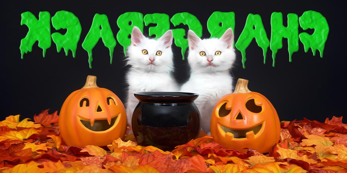 Blog Image - Chargebacks Halloween II